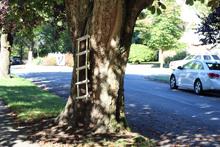 street tree Vancouver